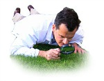 Lawn Consultancy Services