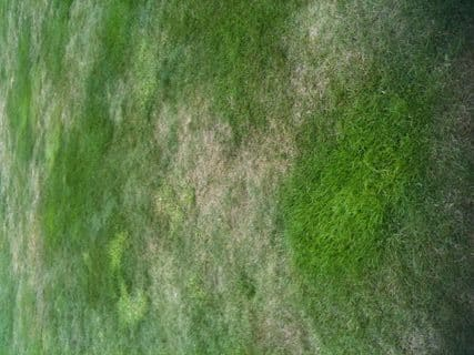 Controlling Dry Patches in Lawns