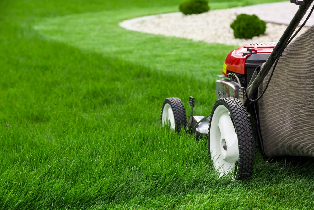 Mowing is the hardest part of any lawn renovation process