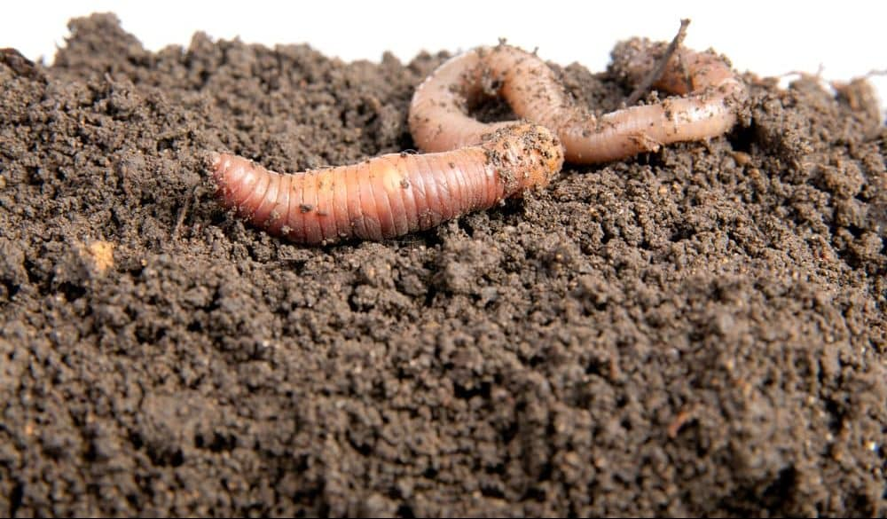 Ten interesting facts about Earthworms
