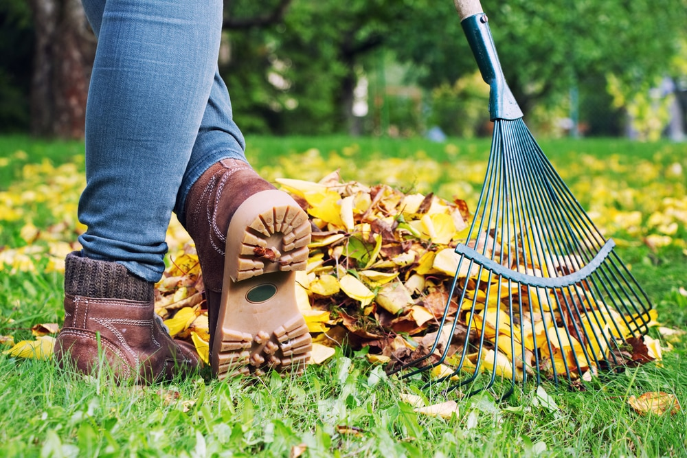 October Lawn Care Tips