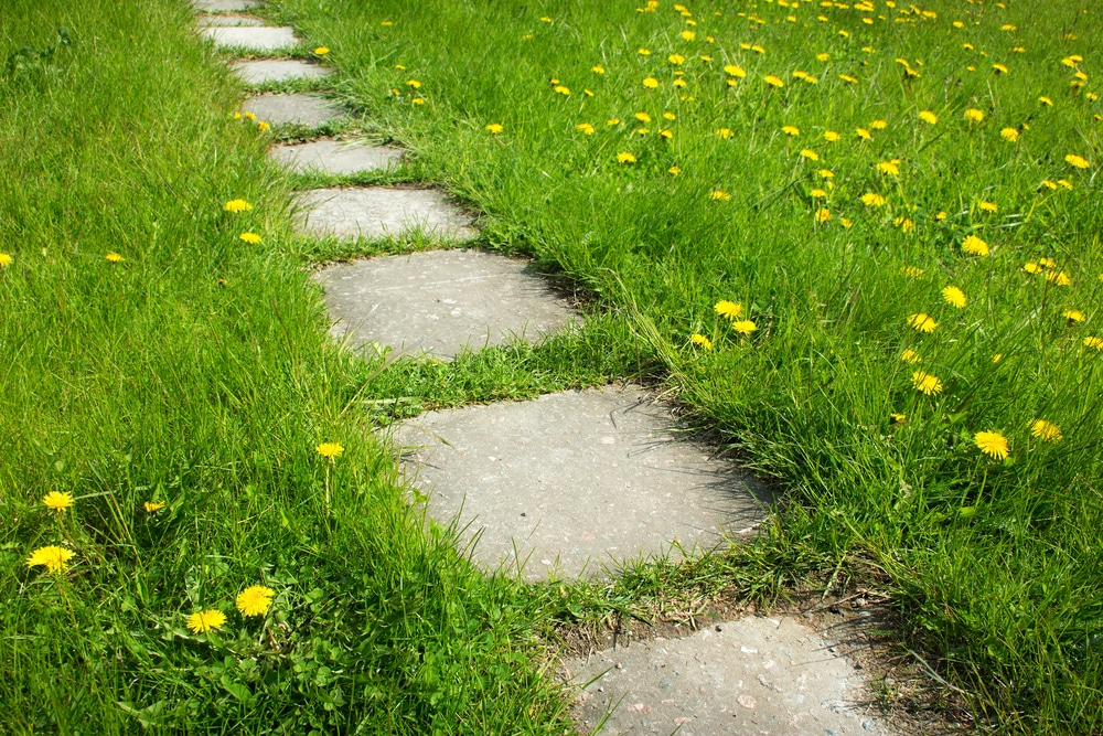 Catch up on your garden and lawn weed control now!