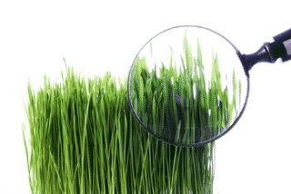 How to become a Lawn Expert