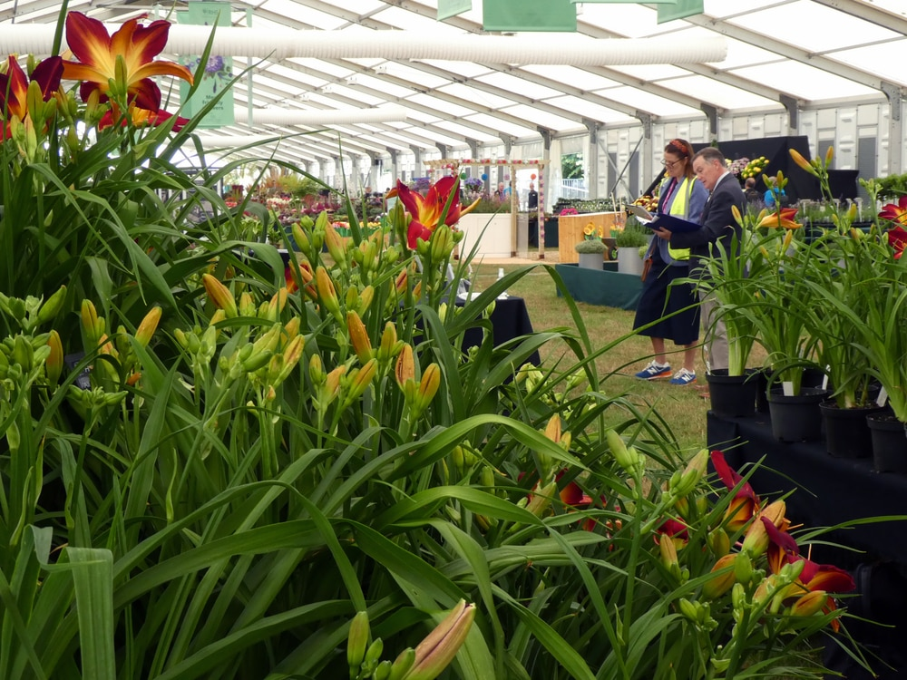 Lawn Specialist becomes a RHS Judge & Speaker